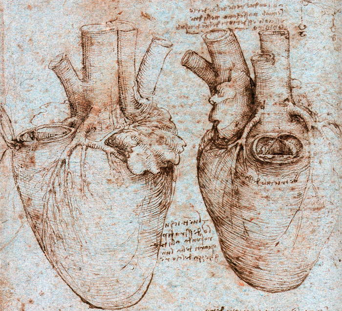 Afirman que Leonardo da Vinci fue un pionero de la bioingeniería ...