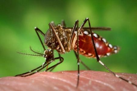 Zika, un virus de origen africano que llegó al continente americano