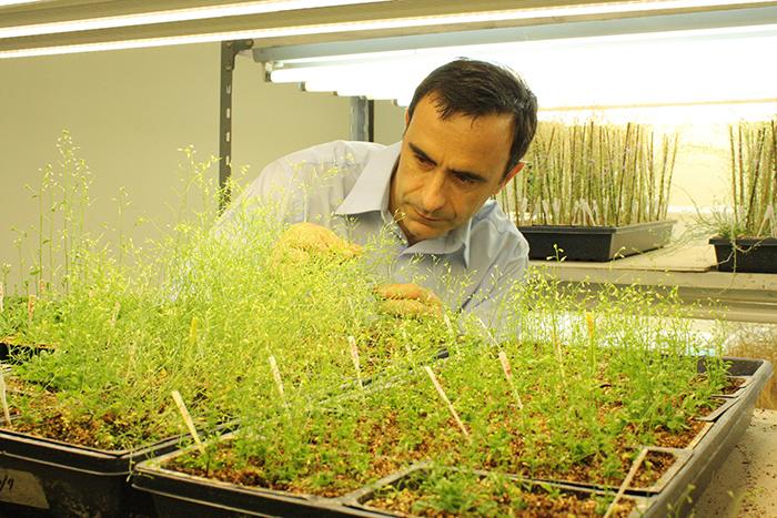 Premio internacional para científico argentino que estudia las plantas