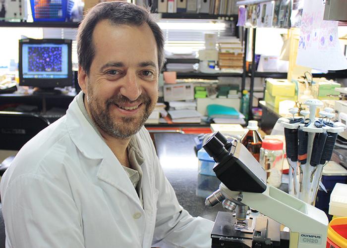 Hallan molécula clave para el desarrollo de neuronas a partir de células madre