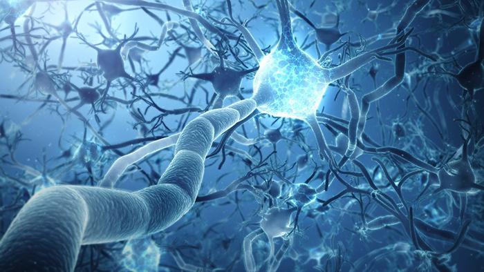 ¿Dulce o nutritivo? Las neuronas aprenden a distinguirlo