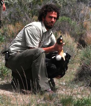 Las balas matan a los cóndores andinos… aunque no den en el blanco