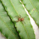 "Resuelven misterio de las arañas ""fantasma"" de la isla Robinson Crusoe"