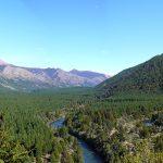 Cultivos de pino en la provincia de Neuquén.