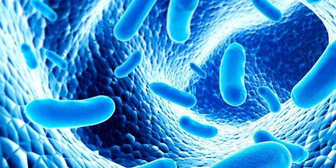 """""""Los probióticos también podrían ser beneficiosos para la piel"""""""