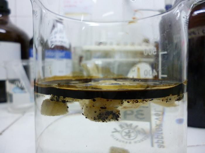 "Investigan bacterias que ""limpian"" derrames de petróleo en el mar"