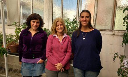 Científicos argentinos identifican mecanismo de defensa del cultivo de papa