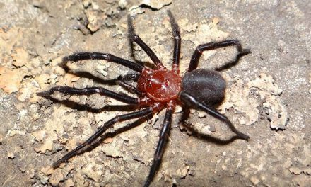 Preocupa la conservación de una rara araña de las sierras bonaerenses