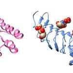 Proteínas con y sin azúcares que comparten un parentesco evolutivo.