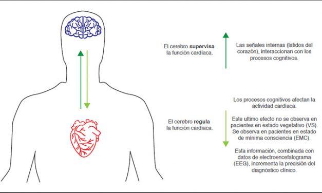 """Los latidos del corazón pueden revelar un residuo de conciencia en pacientes """"vegetativos"""""""