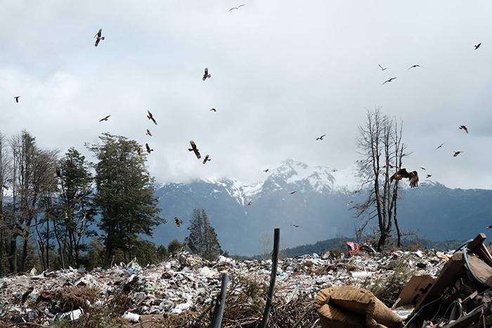 Donde la gente ve basurales, los científicos ven ecosistemas