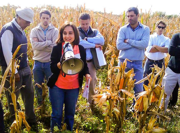 Científicos de Córdoba se acercan a una solución natural para una plaga del maíz