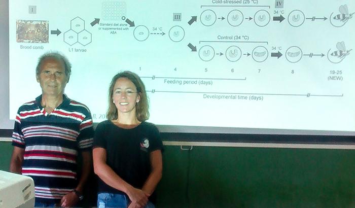 """Un hallazgo """"clave"""" de científicos marplatenses podría hacer crecer el sector apícola"""