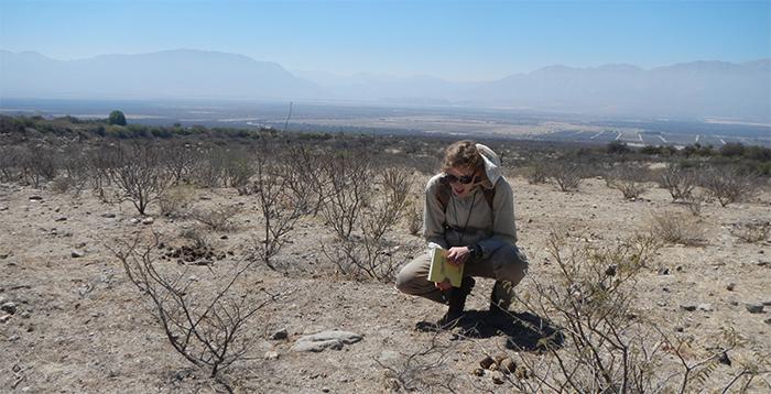 Alerta: la hormiga argentina podría avanzar sobre los viñedos de Cafayate