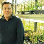 Buscan determinar la estructura 3D de una proteína que prolonga el crecimiento de las raíces