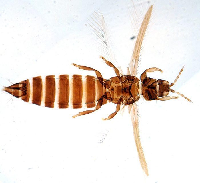 Descubren en Argentina dosespecies de insectos no conocidas para la ciencia