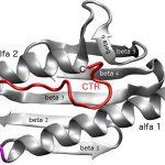 Identifican cambios en una proteína asociada a una grave enfermedad genética