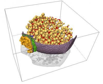 imagen 3d sinapsis