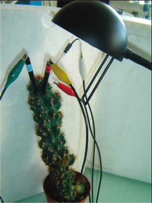 FOTO 1 Biocelda