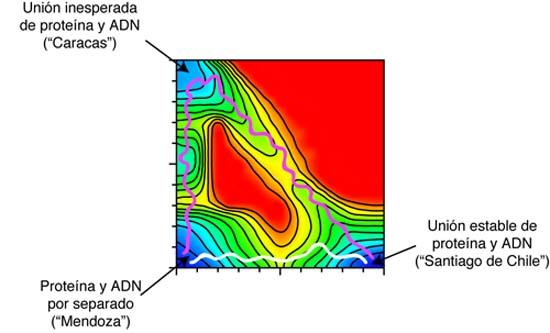 FOTO 1 GRAFICO proteina