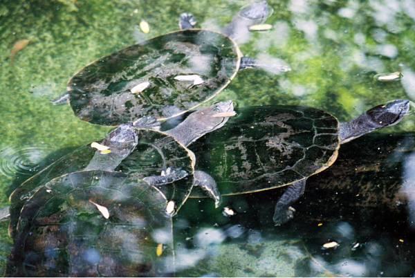 NOTA UNL tortugas