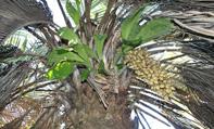 FOTO plantas palmeras
