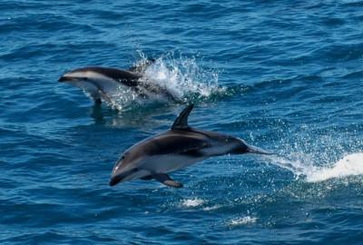 Foto de delfines