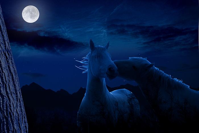 Los ciclos lunares no determinan el sexo de los caballos