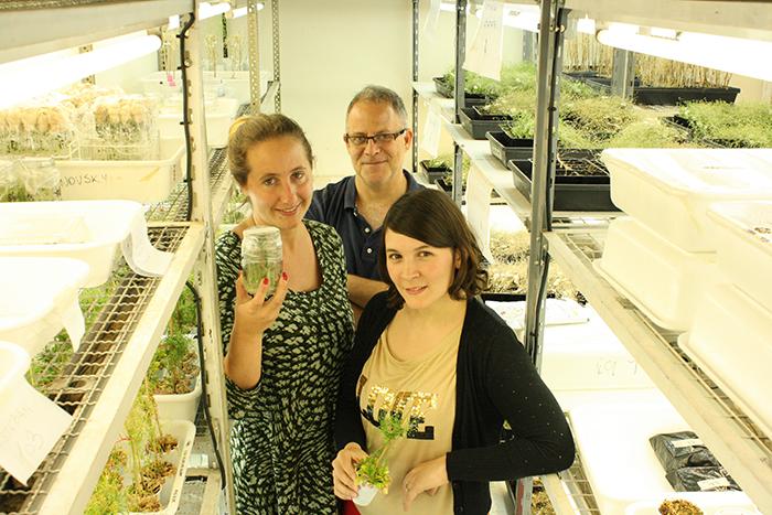 Descubren pieza común del reloj biológico en plantas y humanos
