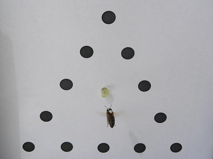 """La visión de las abejas """"no es tan distinta de la de los seres humanos"""""""