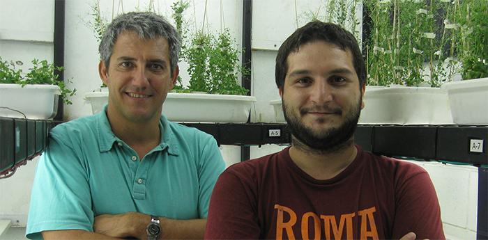 Descubren genes que regulan el crecimiento en altura de las plantas