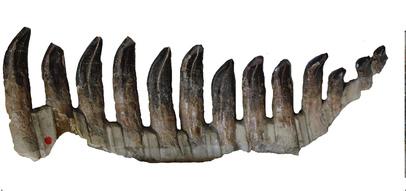 Demuestran que los dientes fosilizados sirven para clasificar dinosaurios
