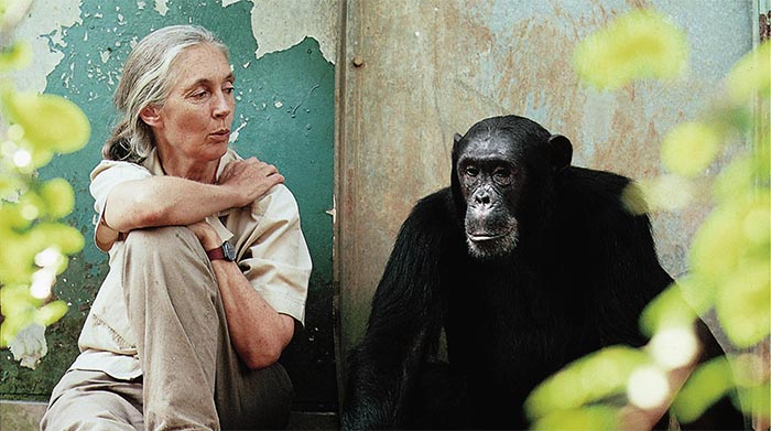 Para Jane Goodall, los zoológicos no son anacrónicos