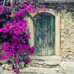 Old wooden door and bougainvillea