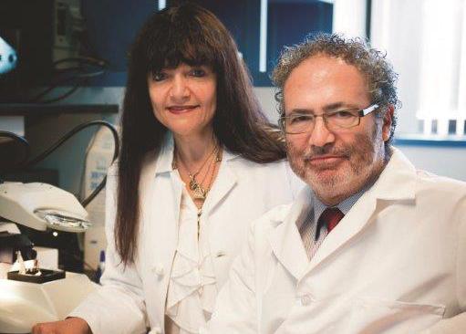 Crean el primer modelo animal de un tumor de cerebro pediátrico