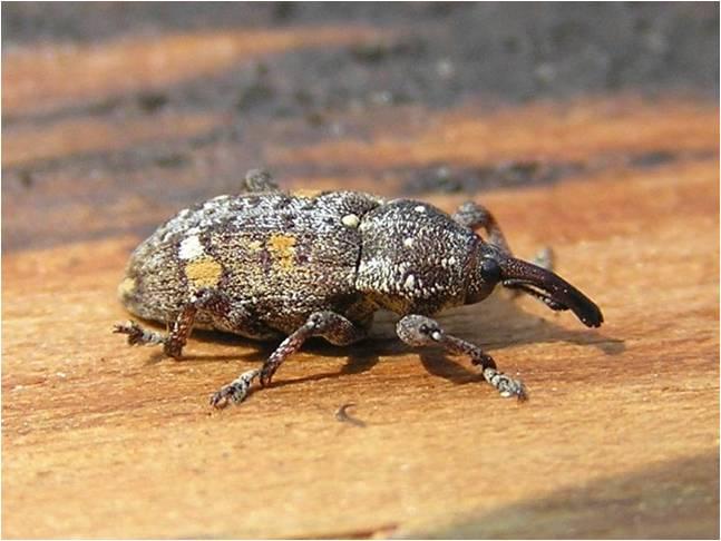 Identifican origen de plaga forestal en Argentina