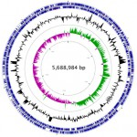 Foto 2 genoma bacteria