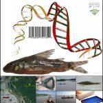 Los investigadores del Instituto de Biología Molecular y Celular de Rosario generaron una biblioteca de código de barras genéticos que permite la identificación de 79 especies de peces que equivalen a casi la mitad del total que habita en el tramo inferior del río Paraná.