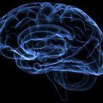 Experiencias novedosas podrían atenuar recuerdos persistentes de miedo, indica el estudio de científicos de la UBA y del CONICET.