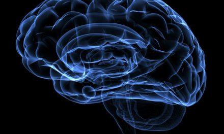 Logran atenuar recuerdos persistentes de miedo