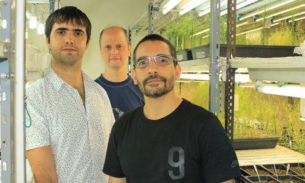 Descubren cómo las plantas combinan fotorreceptores para percibir el paso del tiempo