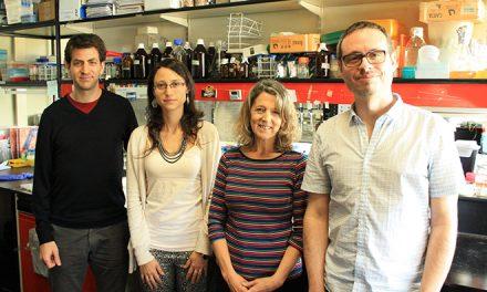Identifican la red genética de virulencia en la bacteria de la brucelosis