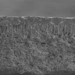 Los investigadores de Córdoba y San Luis desarrollaron nanofiltros eficaces para purificar aceite de soja.
