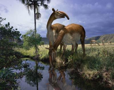 """Revelan el ADN del """"notable cuadrúpedo"""" extinto que descubrió Darwin en Santa Cruz"""