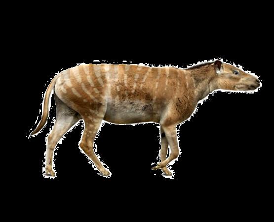 El fósil de un mamífero herbívoro recuerda que la Antártida no siempre estuvo cubierta de hielo