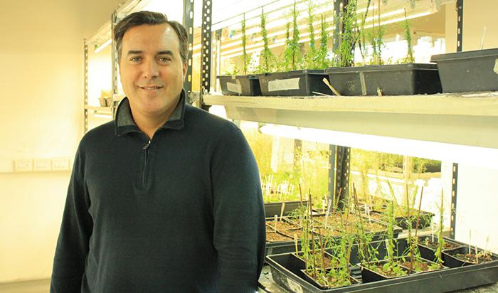 Distinguen a investigador que potencia las raíces de las plantas
