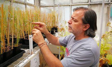 Identifican una pieza clave de la fecundación en plantas