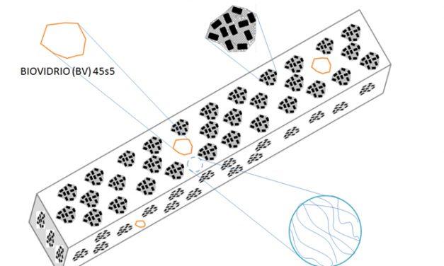 El biomaterial para la regeneración del tejido óseo está formado por componentes inorgánicos y una parte del cordón umbilical humano. Créditos: Cristian Martínez.