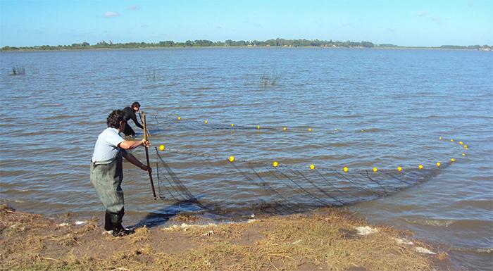 Muestreo con red de arrastre en la  Laguna de Chascomús.  Créditos: Dr. Leandro Miranda.