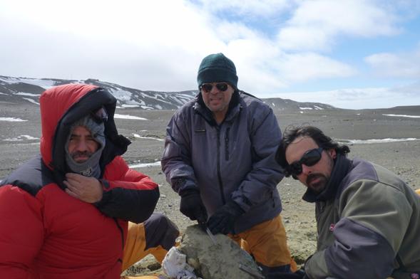 Estudio de fósiles amplia la diversidad de tiburones que habitaron la Antártida